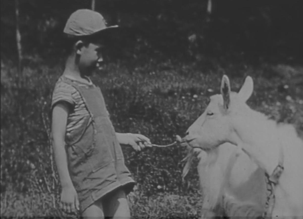 La sensibilisation à la nature dans les colonies de vacances des années 1960